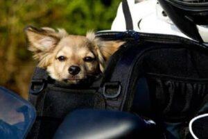 5 mejores maletas o baúles para llevar al perro en moto – Baúl perros moto