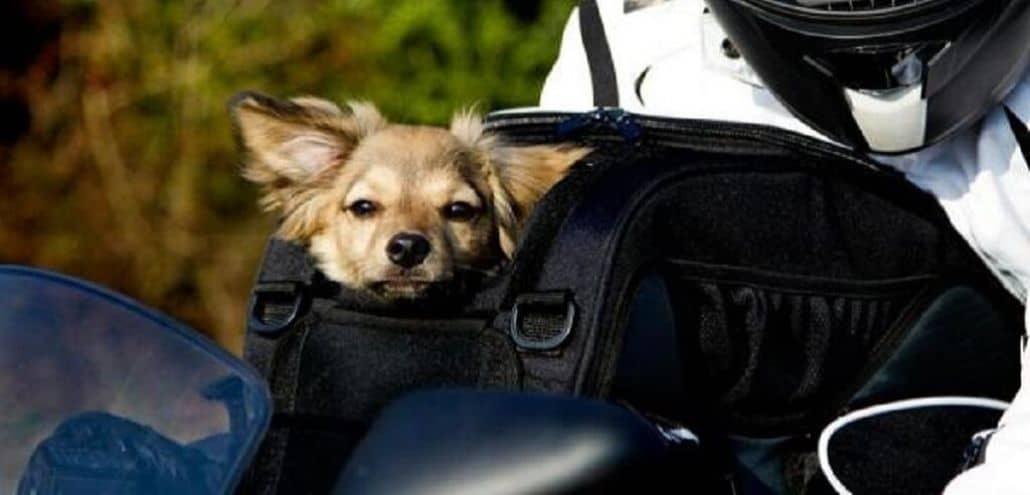 perros viajando moto